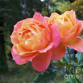 Roses in the Woods by Mary Ann Weger