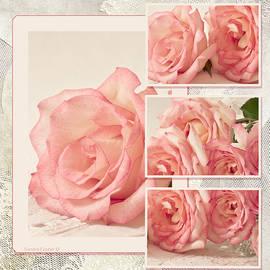 Sandra Foster - Roses Oh Roses