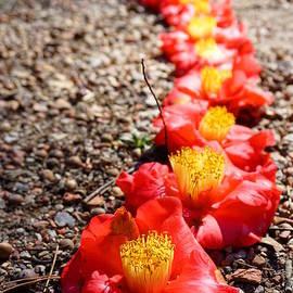 Kathryn Jinae - Row of Flowers