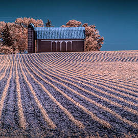 Randall Nyhof - Rows in a Farm Field with Barn and Silo in Infrared