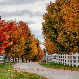 Jeff Folger - Rows of maples in fall colors
