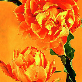 Alexander Vinogradov - Royal Tulips.
