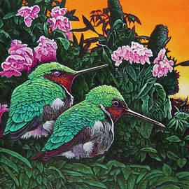 Michael Frank - Ruby-throated Hummingbirds