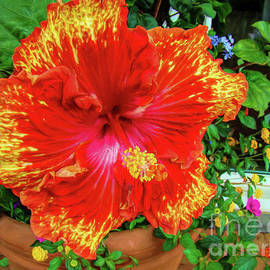 Sue Melvin - Ruffly Red and Yellow Hibiscus