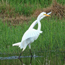 Carol Groenen - Runaway Egret