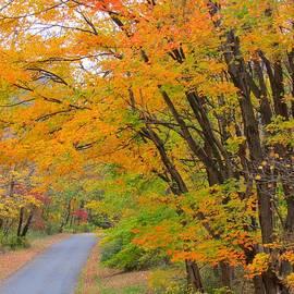 Anne Ditmars - Rural Road