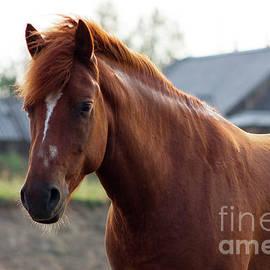 Svetlana Svetlanistaya - Rustic horse
