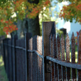 Rusting Fence Line by Kathy Carlson