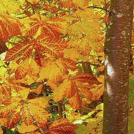 Dan Carmichael - Rusty Autumn Fall Color Leaves in the Blue Ridge AP