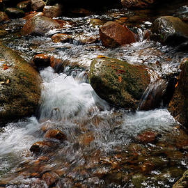 Bill Morgenstern - Sabbaday Brook