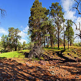 Bill Robinson - Sacred Canyon, Flinders Ranges