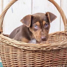 Edward Fielding - Sad Puppy