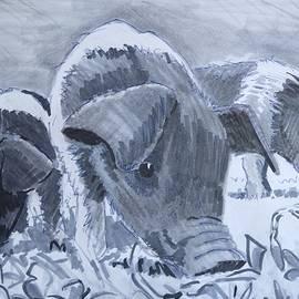 Saddleback Piglets by Mike Jory