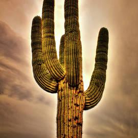 Roger Passman - Saguaro and Slate Gray Winter Sky