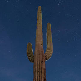 Steve Gadomski - Saguaro At Night