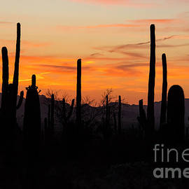 Saguaro National Park Sunset Six by Bob Phillips