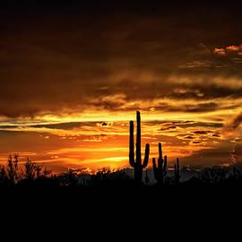Saija Lehtonen - Saguaro Silhouette Sunset