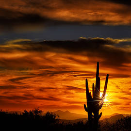Mark Myhaver - Saguaro Sunset H31