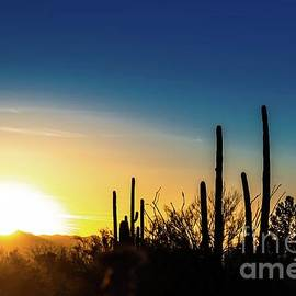 Saguaro Sunset by Jim DeLillo