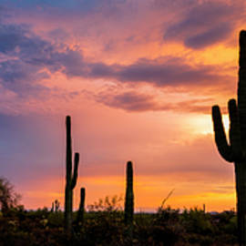 Radek Hofman - Saguaro Twilight