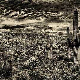 Roger Passman - Saguaros and Clouds