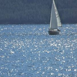 Sailboat Splendor by Barkley Simpson