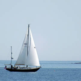 Sailing the Coast by Bill Morgenstern