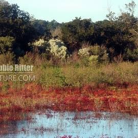 Salicornia 4325 by Captain Debbie Ritter