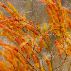 Linda Murdock - Salicornia