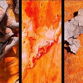 Lexa Harpell - Salmon Gum Tree Triptych  #3