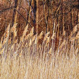 Terry Davis - Salt Marsh Grass