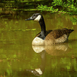 Sam's Goose by Jeff Kurtz