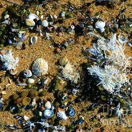 RC deWinter - Sand Shells and Stuff