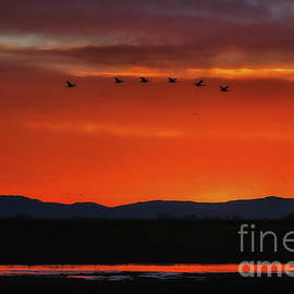 Luis A Ramirez - Sandhill Cranes At Sunrise