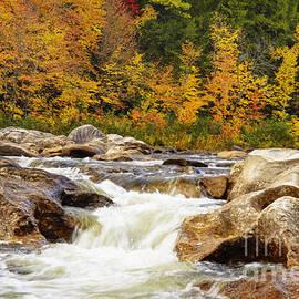 Alana Ranney - Sandy River in Autumn