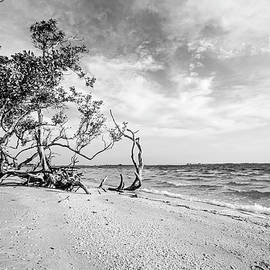 Scott Pellegrin - Sanibel Island Morning