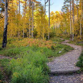 Brian Harig - Santa Fe National Forest Aspen 1 - New Mexico