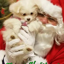 Santa Paws  by Darren Robinson