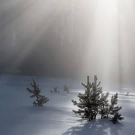 Sapling Spotlight by Ann Skelton