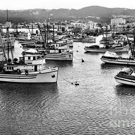 Sardine purse seiners Fishing Fleet At Anchor, Monterey Bay Aug. 1946 by California Views Archives Mr Pat Hathaway Archives