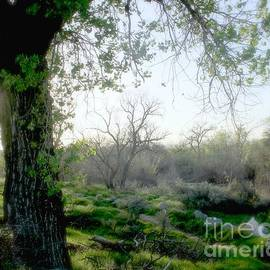 Saturday Meadow by Jenny Revitz Soper