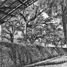 Carol Groenen - Savannah Perspective - Black and White