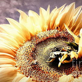 Janine Riley - Savannah Skies - Sunflower
