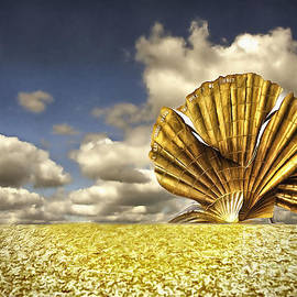 Scallop II by Jack Torcello