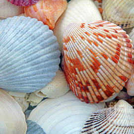 Jim Beckwith - Scallop Shells