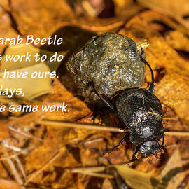 Scarab Beetle Poster 01 by Jim Dollar