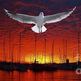 Scarlet Ocean Sunset. Original exclusive photo art. by Geoff Childs