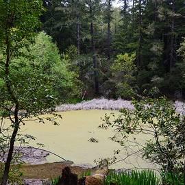 Schilling Lake by Warren Thompson