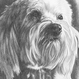 Schnoodle by Barbara Keith