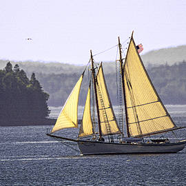Schooner American Eagle At Full Sail by Marty Saccone